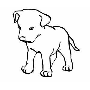 yellow lab puppy coloring pages - desenhos para colorir filhotes