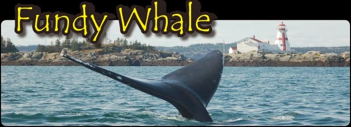 FUNDY WHALE