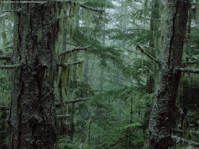 Nature HD Desktop Wallpaper -04