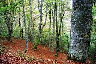 Vista de una parte del bosque