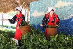 Model of girls picking tea at the flower festival
