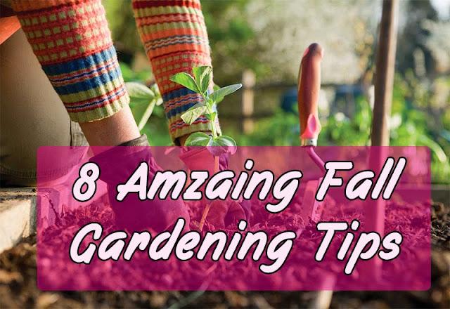8 Fall Gardening Tips