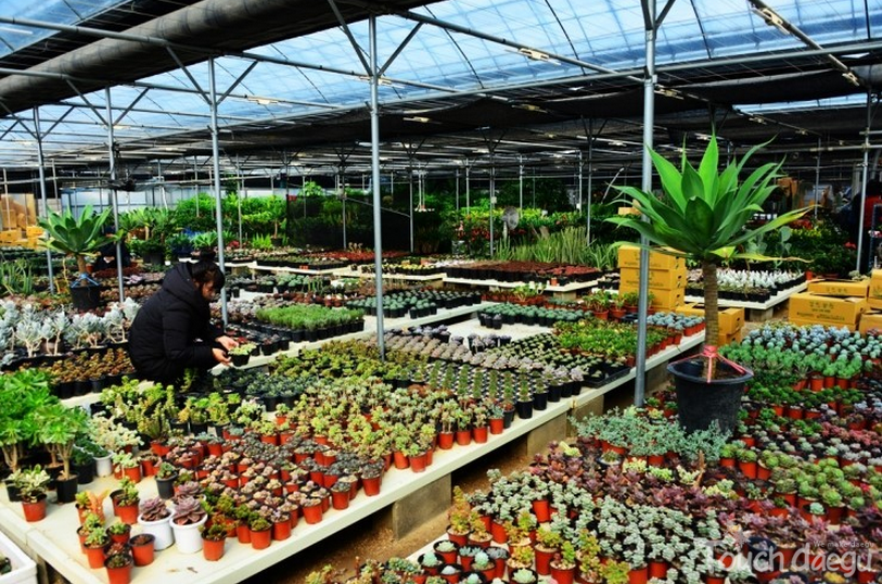 A number of plants in pots are on sale