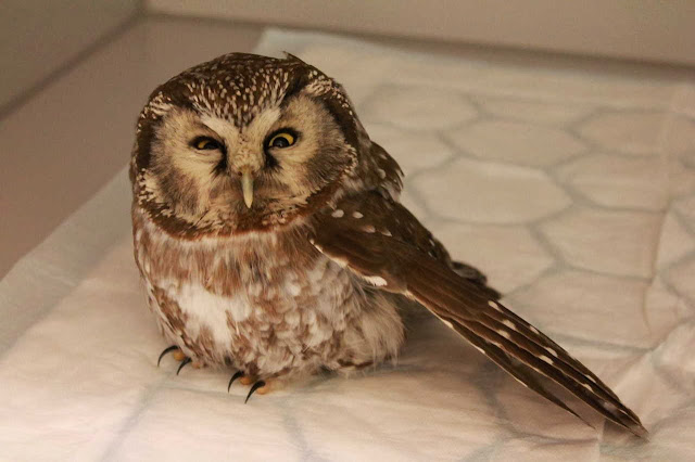 Funny animals of the week - 20 December 2013 (40 pics), cute owl pic