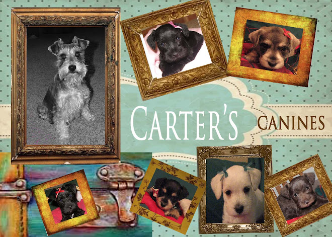 Carter's Canines