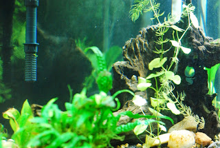 driftwood, acid buffer, new freshwater aquarium start