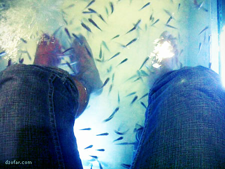 Akupuntur Ikan Nilam dan Gararufa di Pantai Kartini