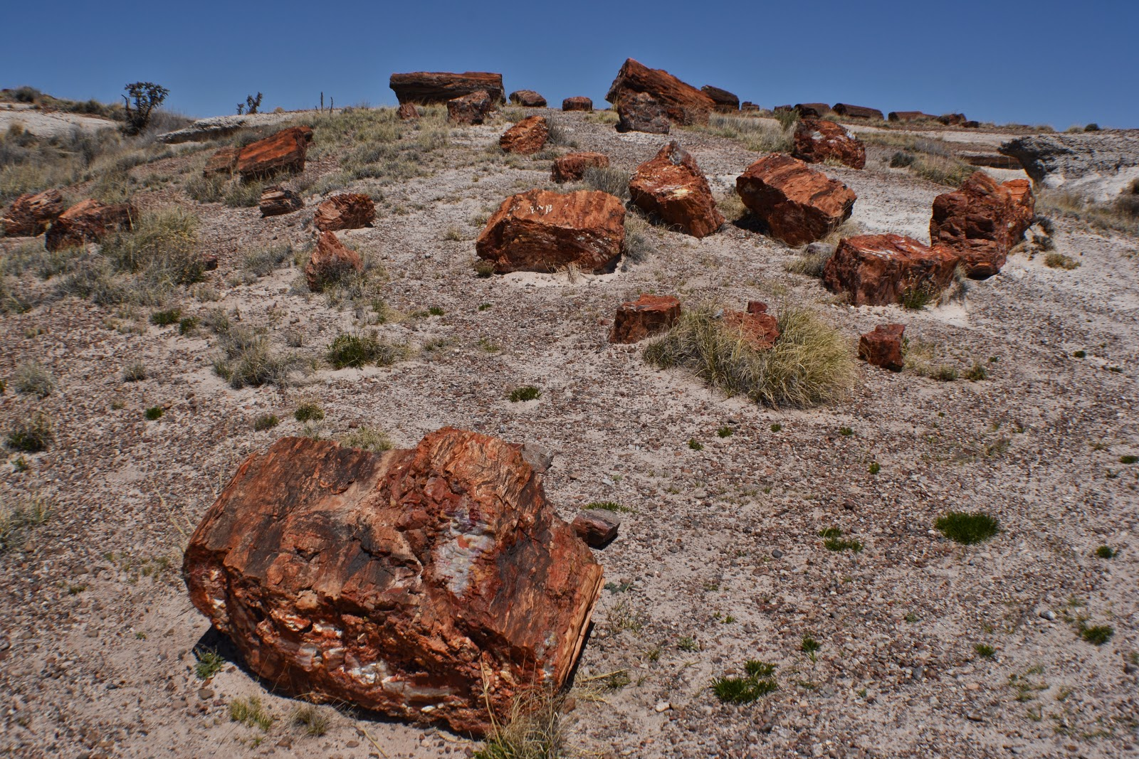 petrified forest natl pk dating Hard woods: 10 amazing petrified forests  petrified forest national park, arizona, usa  perhaps the largest such accumulation of petrified wood in europe dating from 15 to 20 million years .