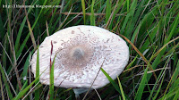 funghi a baselga