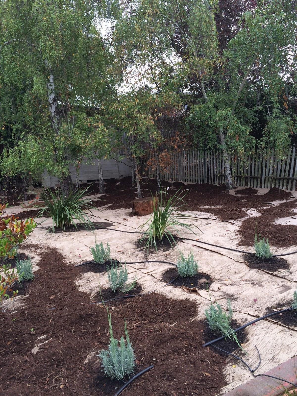sheet mulch 101 : fiddlehead gardens