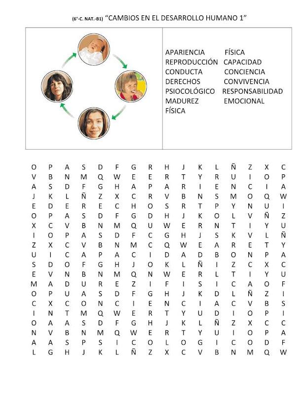 Sopa de letras niñez, adolescencia, adultez y vejez