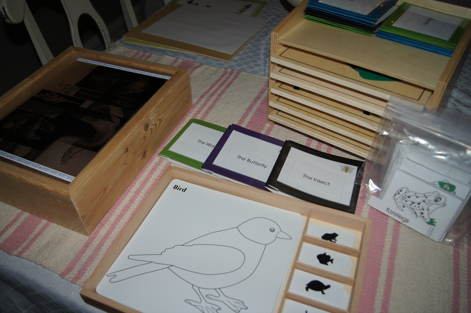 zoology montessori These lesson plans are derived from the founder of maitri's ami montessori albums if you are not a trained montessori teacher/guide, get trained visit ami usa's website for details.