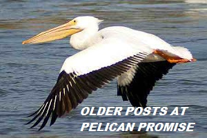 Older Posts at Pelican Promise