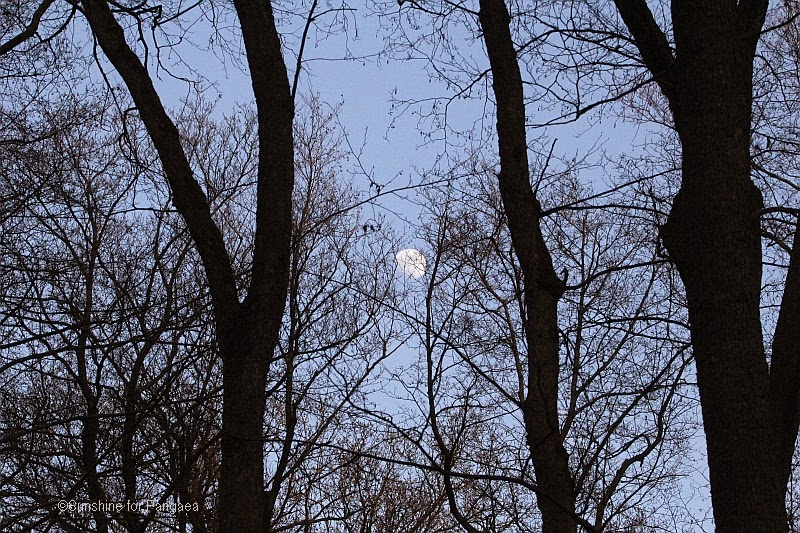 the moon in the forest
