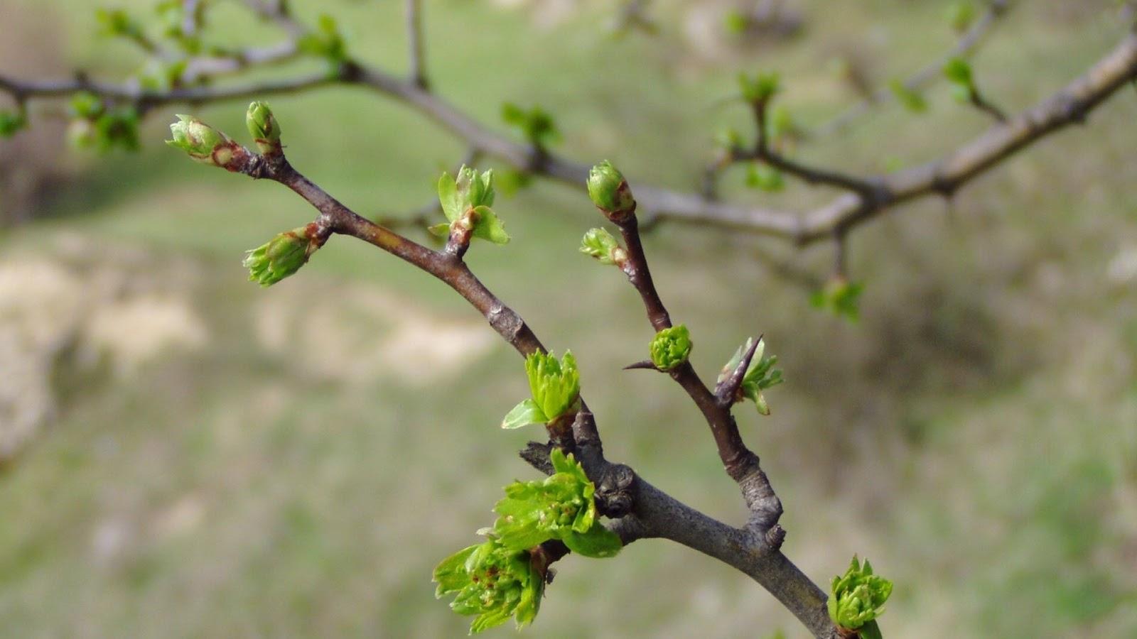 Burgeoning Branch