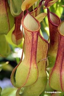 List Nation: 8 Amazing Plants