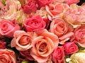 flores flores floressssssssss