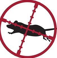 Web Cazador de ratas