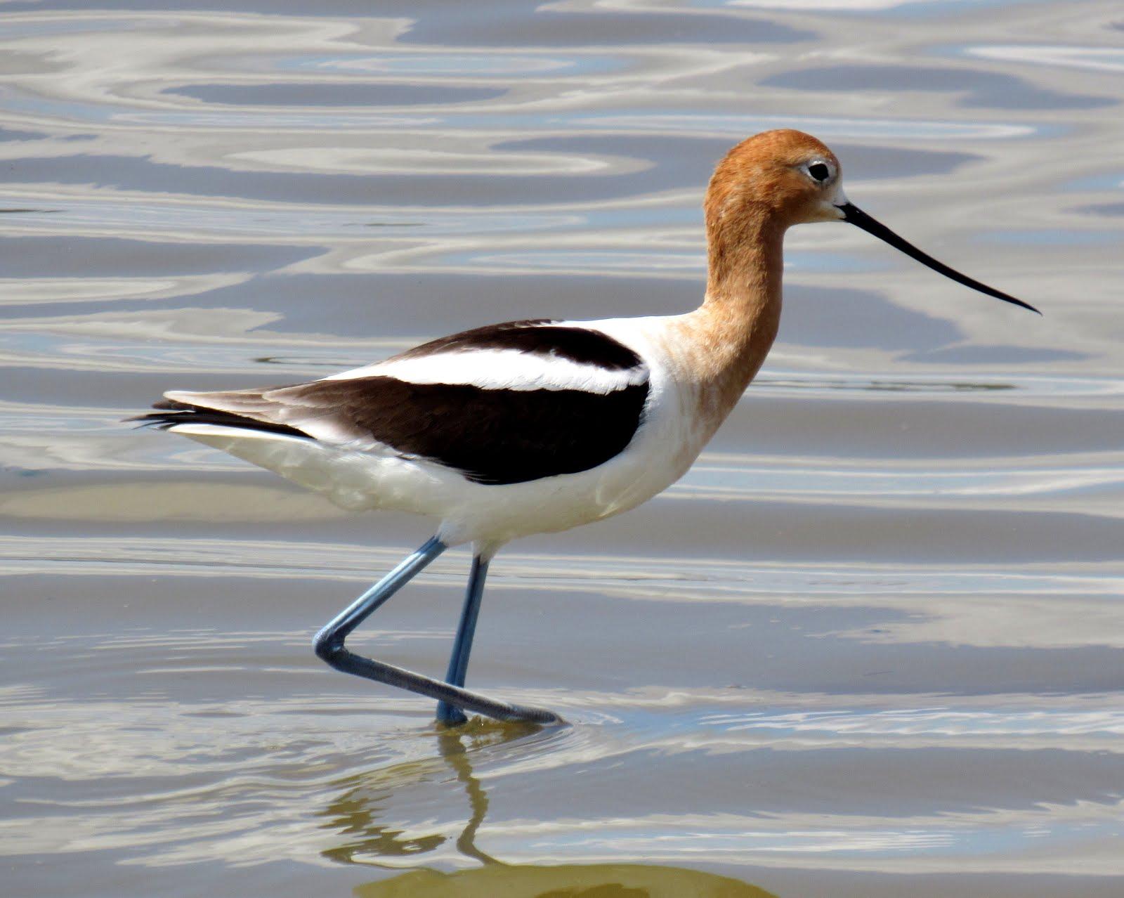 Wetland Wanderings: Exploring the Great Valley's Marshlands