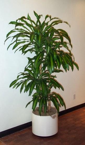Serendipia plantas de interior que purifican el aire y - Plantas de interior que purifican el aire ...