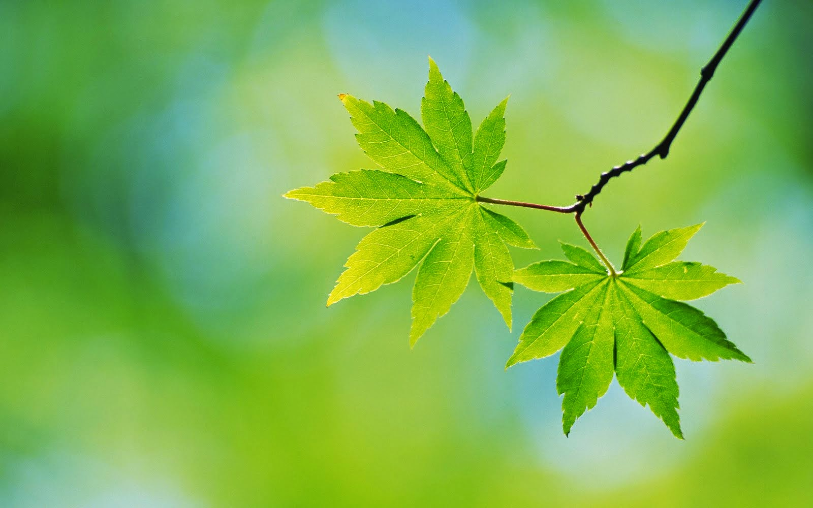Wallpapers For Pc Nature Leaf HD Wallpapers PC