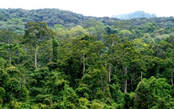 an introduction to the climate of the tropical savanna