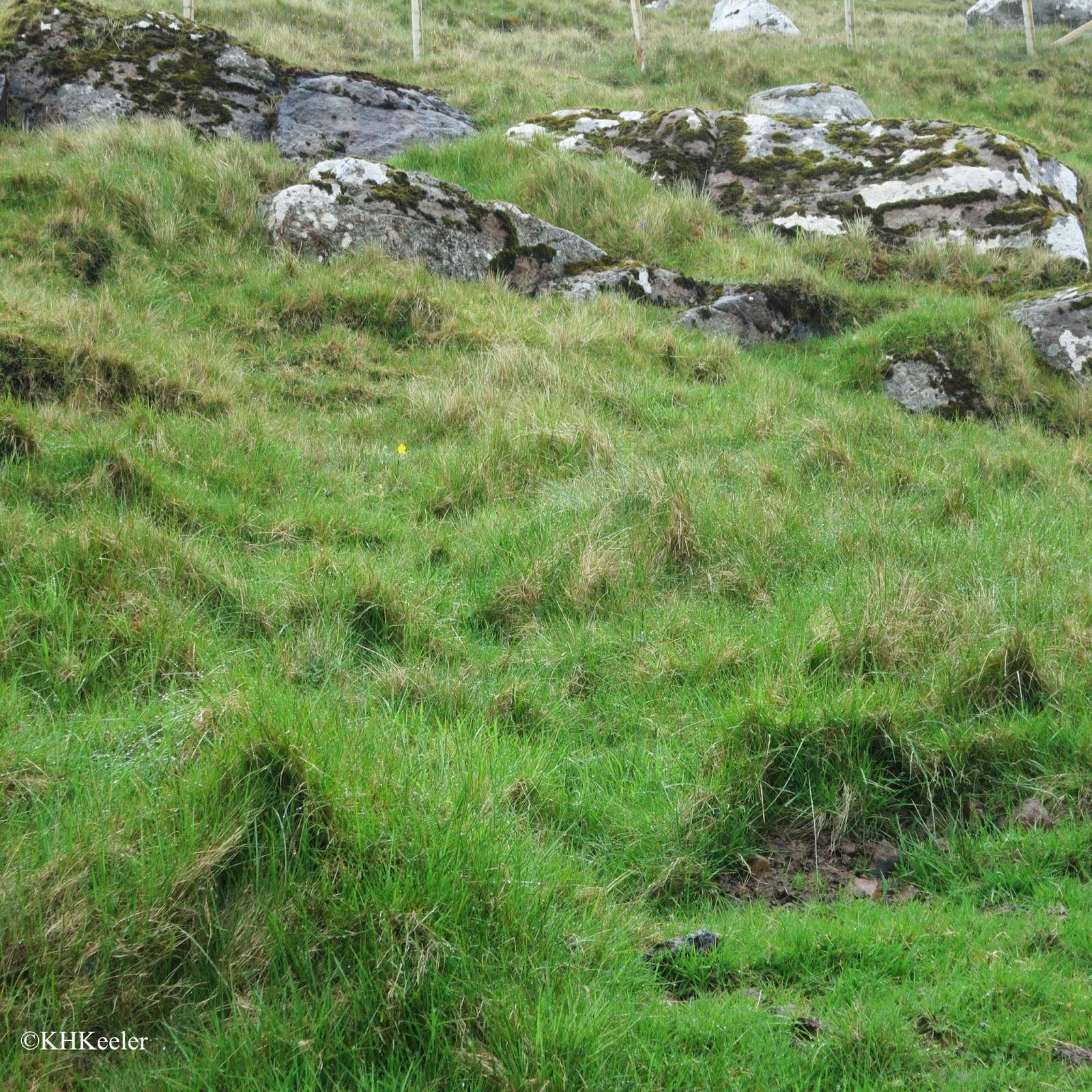 grassy hillside, Faroe Islands
