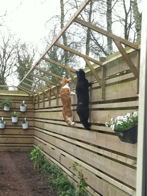 Todo sobre mi gato gatos paracaidistas y soluciones for Ahuyentar los gatos del jardin