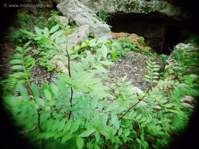 Cova del Campbdel Bisbe