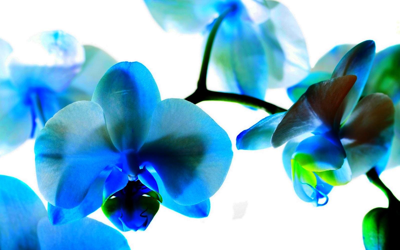 http://2.bp.blogspot.com/-FYbBXYBupmQ/UDdC3RqVg9I/AAAAAAAAAr4/MDQSKteEaWc/s1600/1152887-1920x1200-orchid.jpg