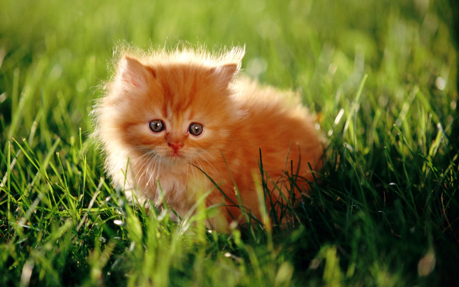 Image result for sweet animals pictures