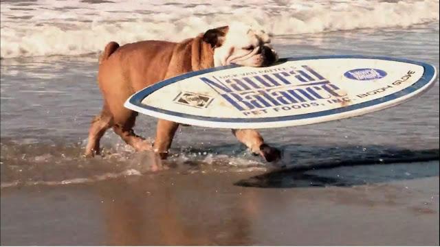 Le chien le plus cool du monde