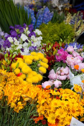 Bellevue club northwest flower garden show - Northwest flower and garden show ...