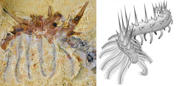 Spiky monsters: new species of 'super-armoured' worm discovered
