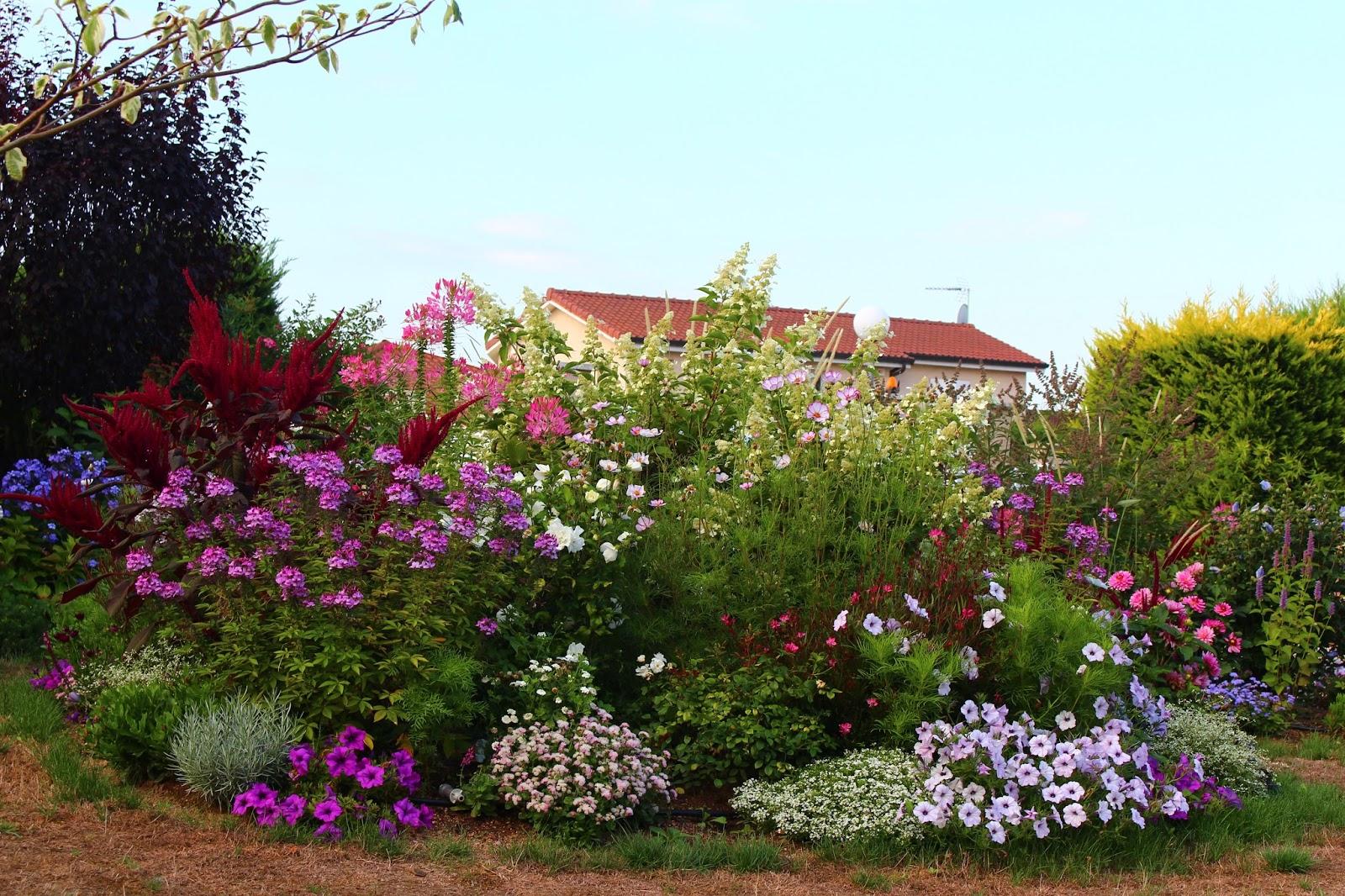 roses du jardin ch neland hydrangea paniculata dans son d cor. Black Bedroom Furniture Sets. Home Design Ideas
