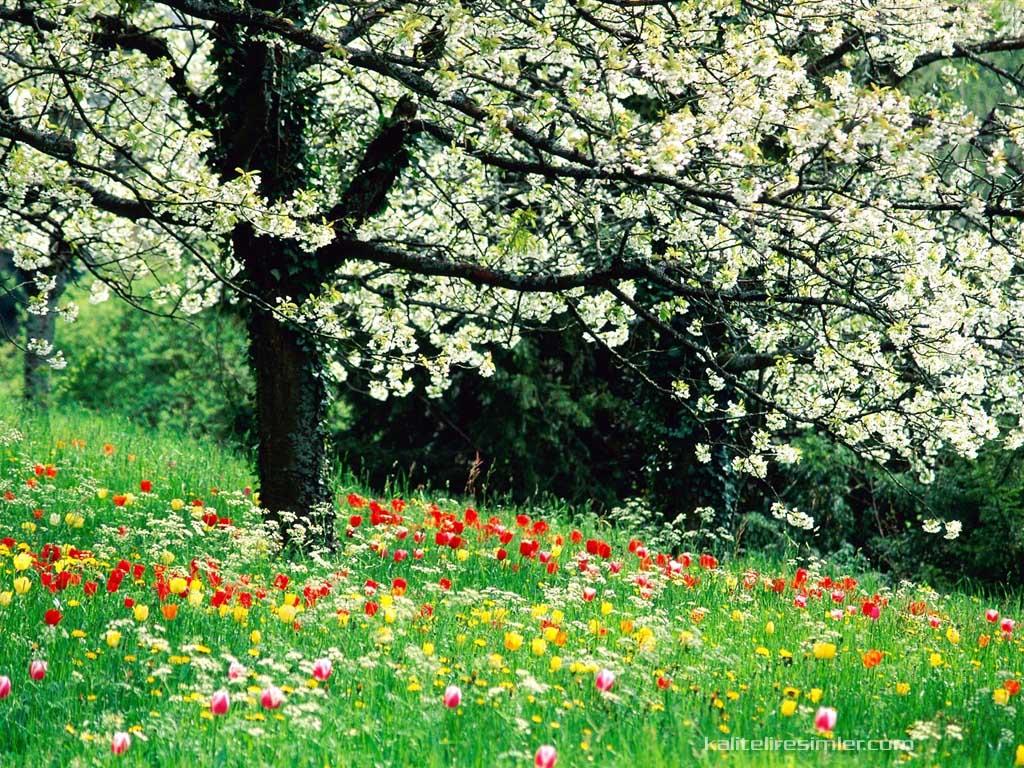Manzara fotoğrafı ilkbahar manzara fotoğrafları ilkbahar manzara
