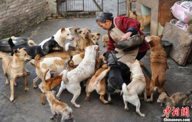 #7. A Chinese grandmother has a deep love for dogs, so she feeds dozens of strays.  - 24 Happy Animal Photos Made Possible By The People Who Saved Them.