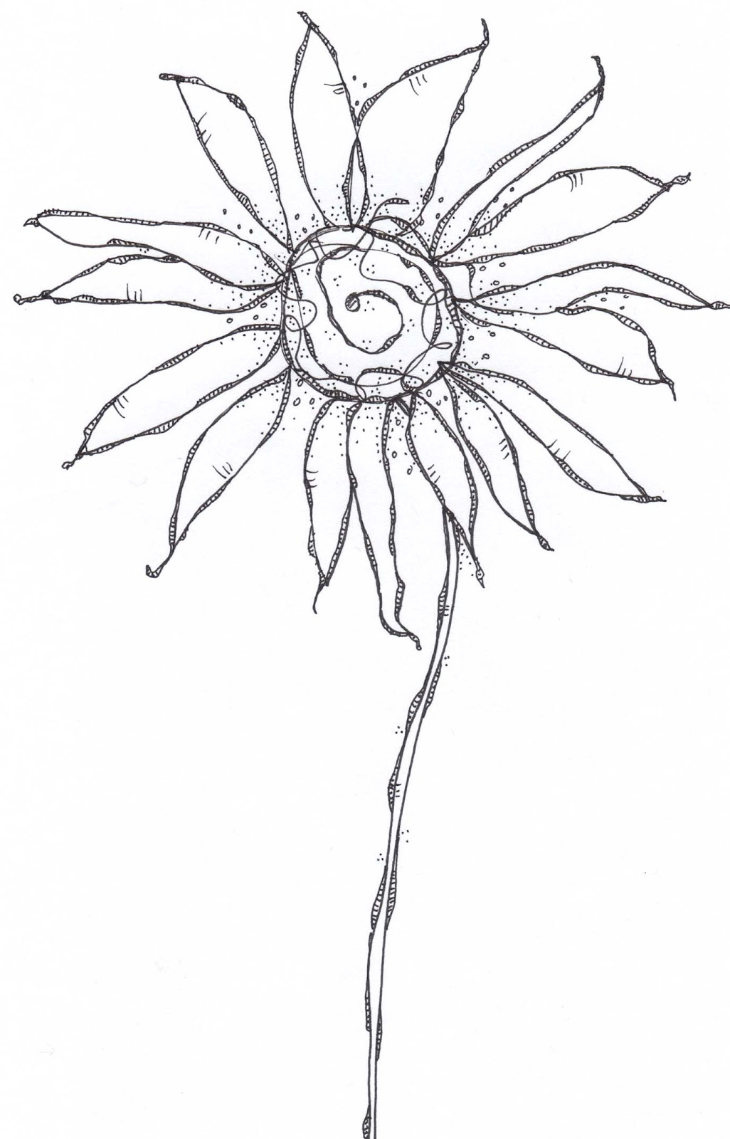 Flower In Line Drawing : Carol sloan studios flower line drawings
