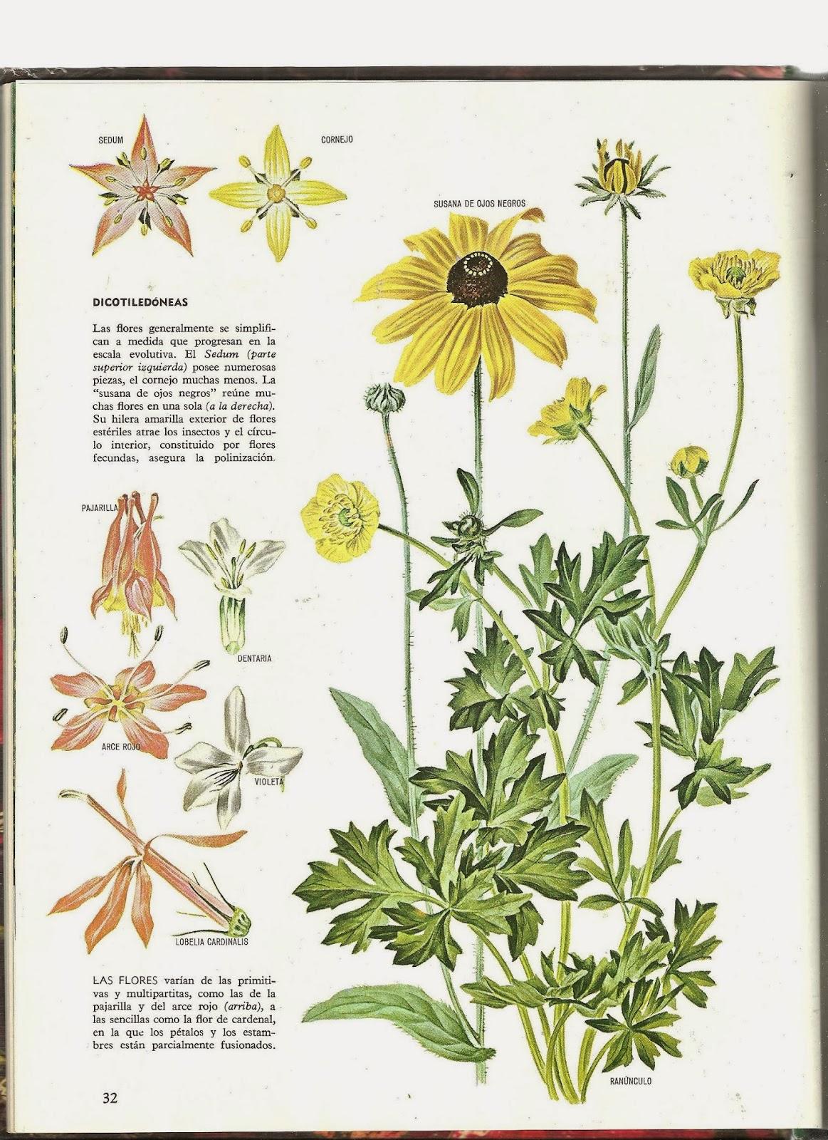 Hermosa Uñas Con Flores En El Interior Bosquejo - Ideas de Pintar de ...