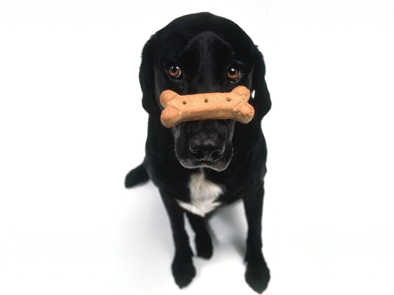 http://2.bp.blogspot.com/-F_gRi7efPEU/Tut7TnliVKI/AAAAAAAAHCQ/rj3bmUooKKA/s1600/black_dog-normal.jpg