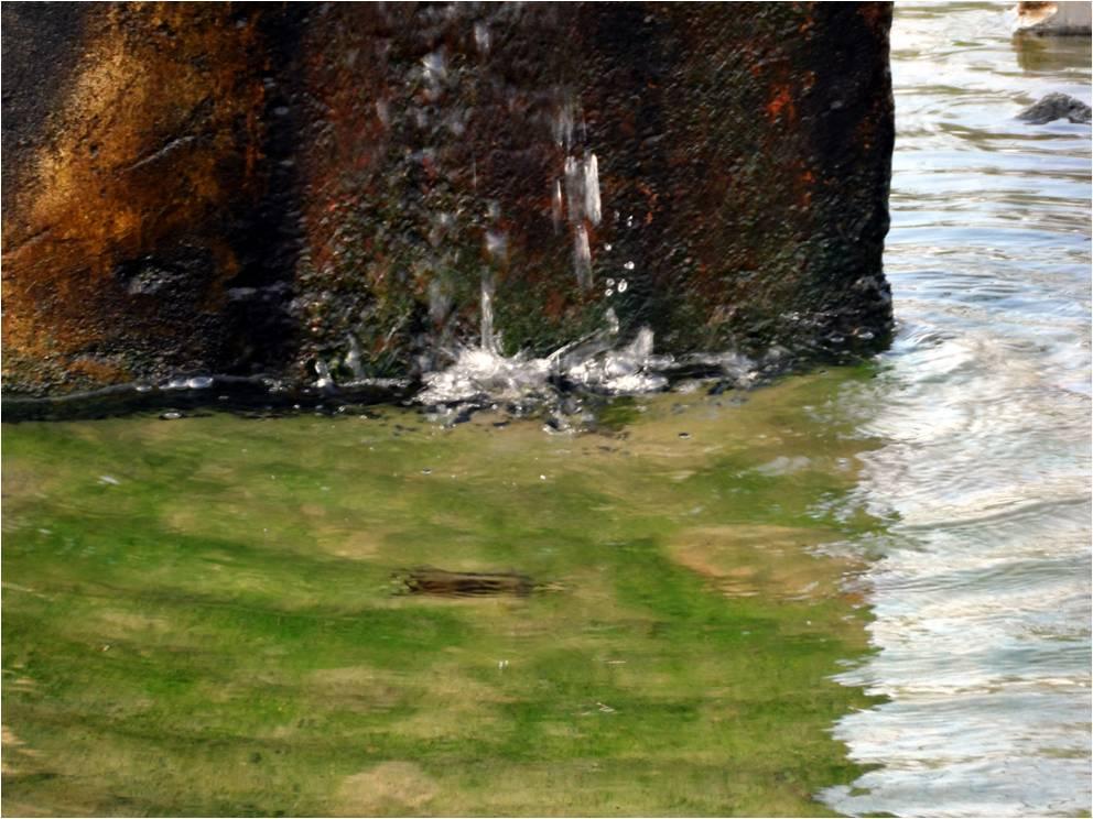 Water contaminated
