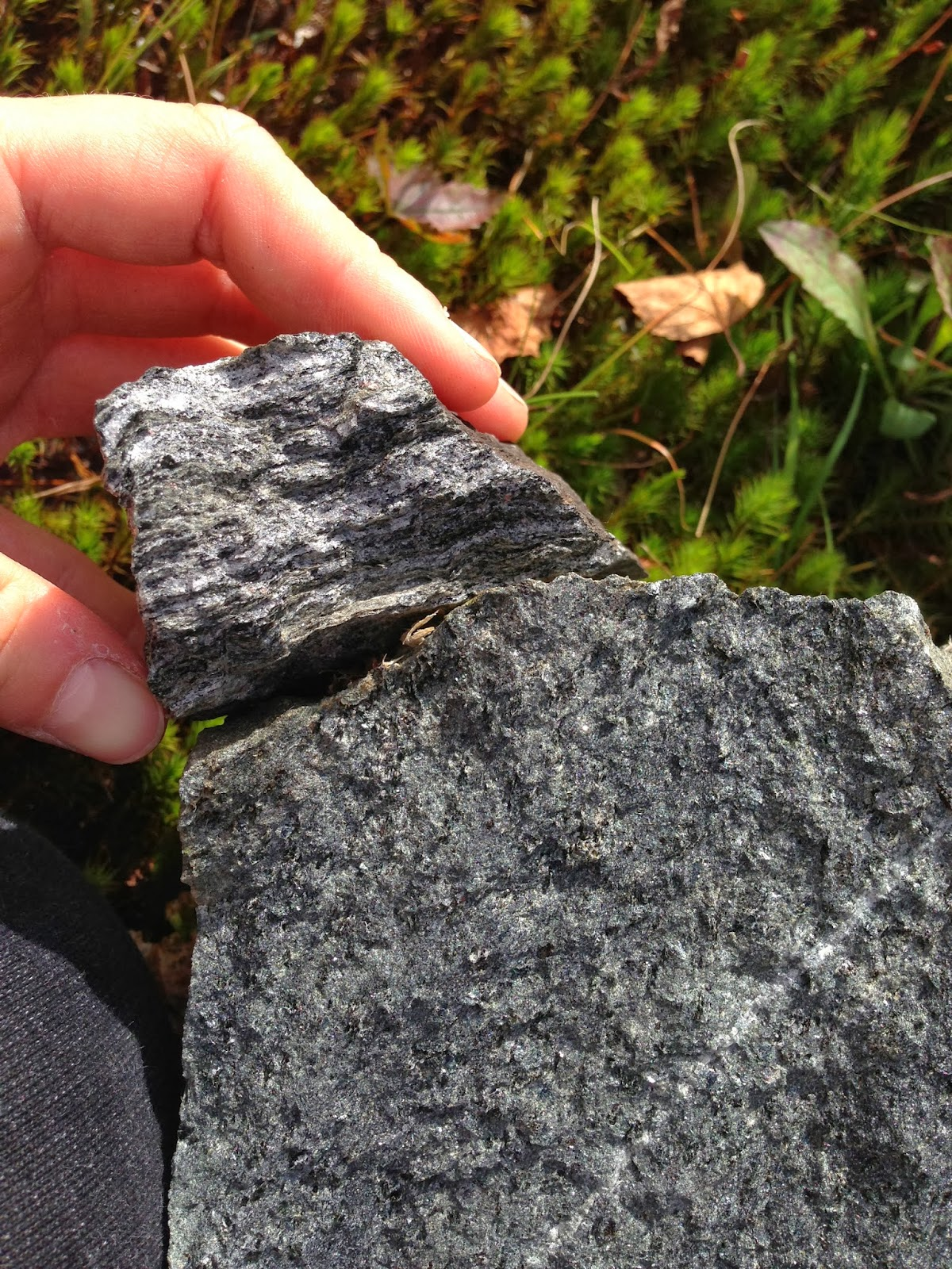 figure 3 7 schist from stop 5 shown on the right it is fine grained and uniform in texture and color on the left is a piece of foliated gneiss with a