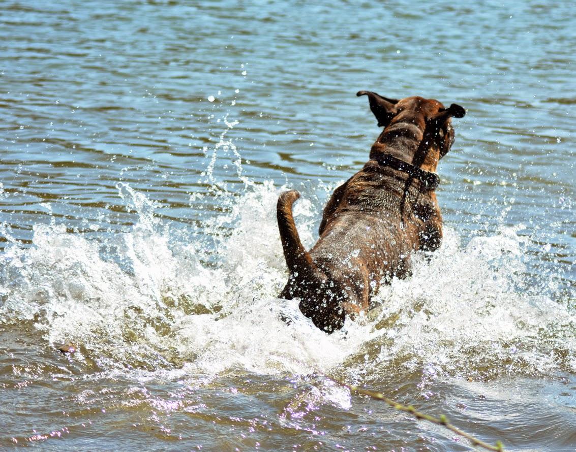 Mittwochs mag ich... an den See!