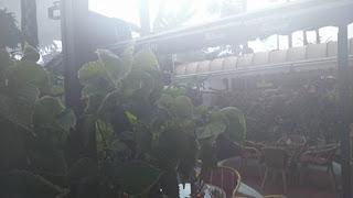imagen de plantas borrosa