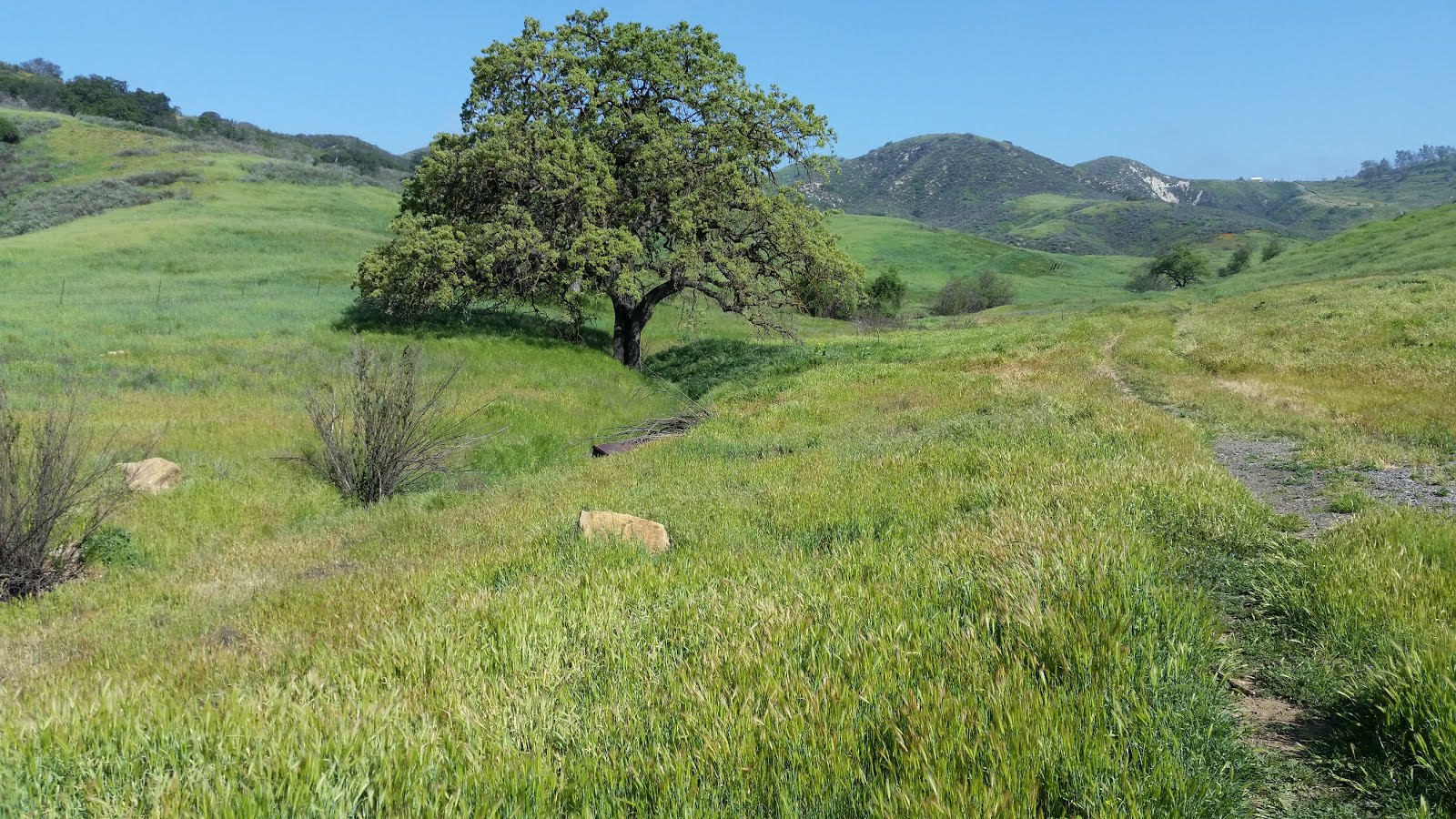 Liberty Canyon Wildlife Corridor