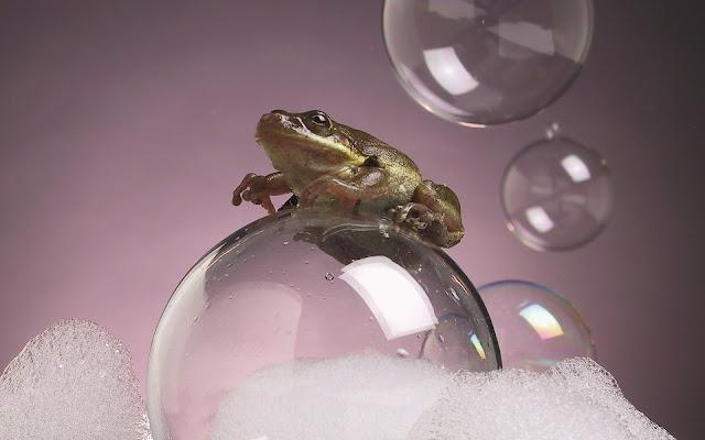 Best Jungle Life frog photo, bubble wallpaper, bubbles