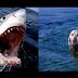 Hilarious Dog vs Shark Balloon Fight