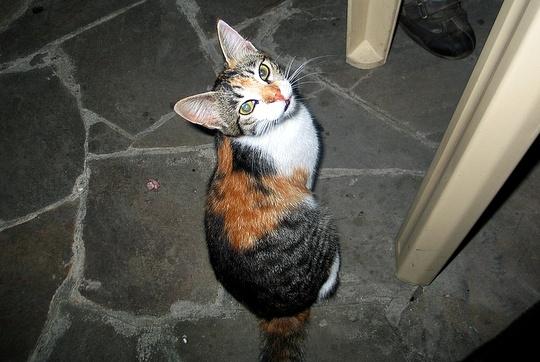 Cat from Sevastopol, Ukraine
