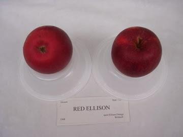 Red Ellison