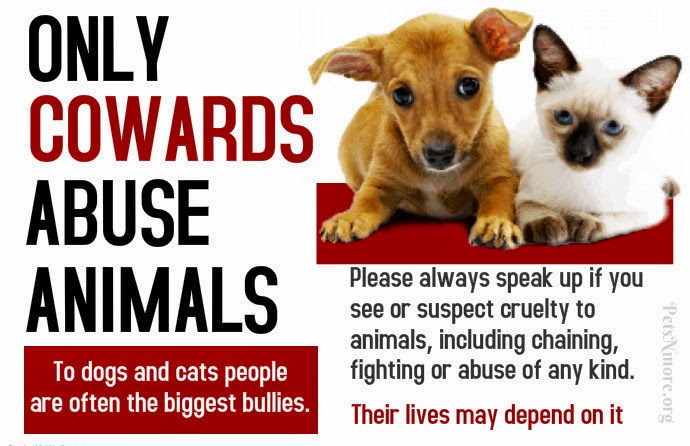 animal abuse and youth violence Violent behavior in children and adolescents can include a wide range of behaviors: explosive temper tantrums, physical aggression,, fighting, threats or attempts to hurt others (including thoughts of wanting to kill others), use of weapons, cruelty toward animals, fire setting, intentional destruction of property and vandalism.